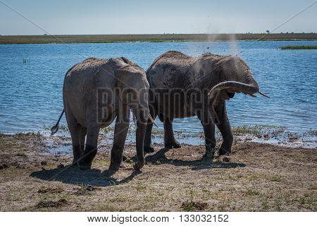 Two Elephants Getting Dust Bath Beside River