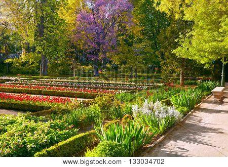 Madrid Botanic Garden - Real Jardin Botanico. Spring time poster