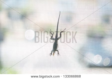 Lizard on a window with mesh on sunlight bokeh background.