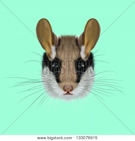 Illustrated Portrait of Garden dormouse. Cute face of fluffy Garden dormouse on green background.