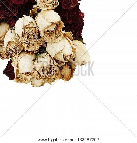Mix dry rose isolated on white background rose closeup rose white rose romance rose beauty rose isolated rose valentine day