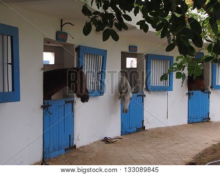 the well-groomed horses standing in stalls at school of riding