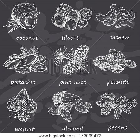 Hand drawn nuts on chalkboard. Vintage design with coconut, pine nuts, almond, pistachio, walnut, filbert illustration. Set of vector sketches.