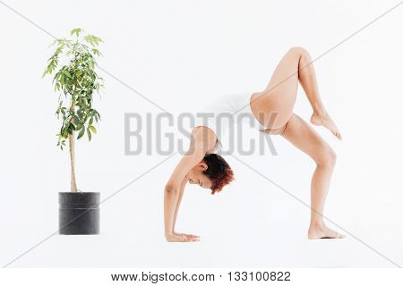 Attractive african american flexible woman doing backbend yoga pose near small tree in pot over white background