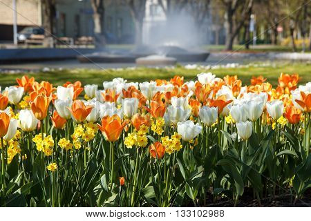 White, yellow and orange flowers in a aprk