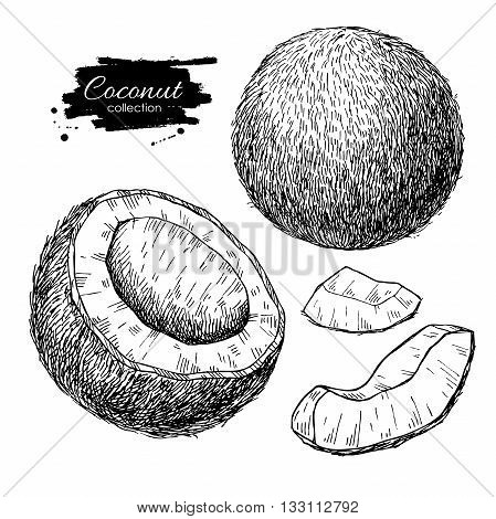 Vector hand drawn coconut set. Tropical summer fruit engraved style illustrations. Detailed food drawing.