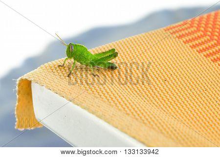 a nice little green hopper on a deckchair