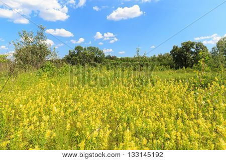 Scene with wild flowers on meadow in steppe
