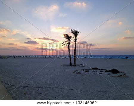 Sunset with twin palm trees growing on the beach of Alexandria