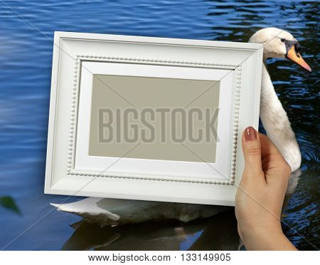 Wooden frame in beautiful woman hands. beautiful swan on background