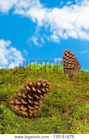 Background for fairytale or garden gnome scenes with pinecones