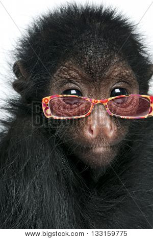 Close-up of Red-faced Spider Monkey, Ateles paniscus wearing sunglasses, isolated on white