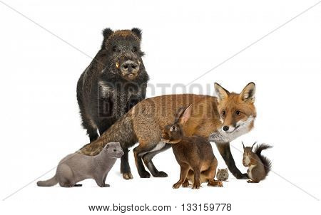 Group of wild animals isolated on white