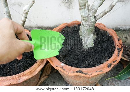 loosen the soil in a small pot with a green small shovel