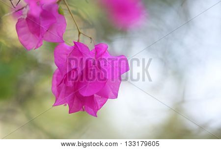 Beautiful pink flowers with bokeh background -