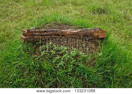 Anthill with a wooden shelf on a green meadow