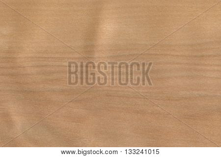 Birch- white (Betula alleghaniensis) North America wood background texture