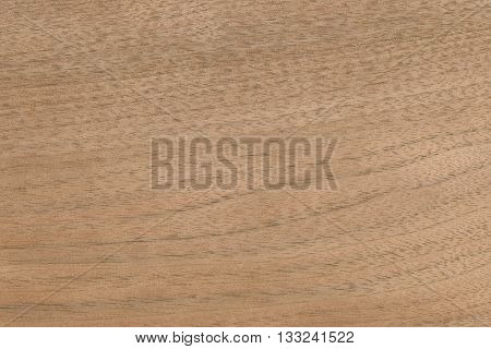 Butternut (Juglans cinerea) USA wood background texture