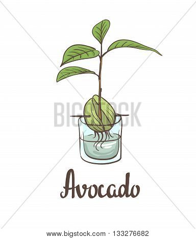 A seedling of avocado on a laboratory flask. Vector illustration