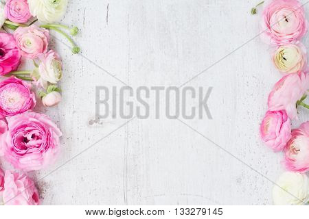 Pink and white ranunculus flowers on white wooden background flat lay scene