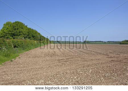 Yorkshire Wolds Potato Field