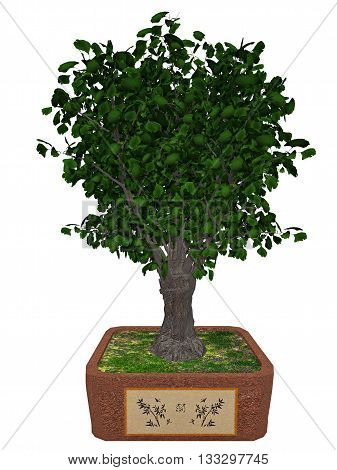 Gingko biloba tree bonsai isolated in white background - 3D render