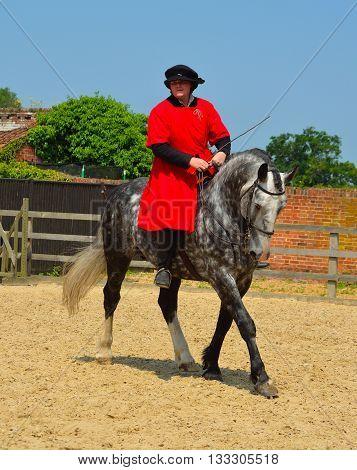 Saffron Walden, Essex, England - June 05, 2016: Dapple Grey horse  being exercised, rider wearing Elizabethan costume.