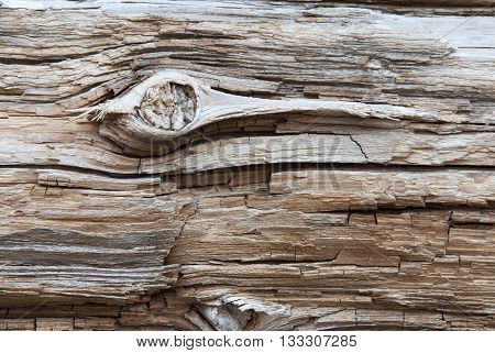 Rustic Brown Wooden Texture Or Background With Knothole. White Texture in Vintage Or Retro Style. Copy Space For Advertisement Or Your Free Text Here