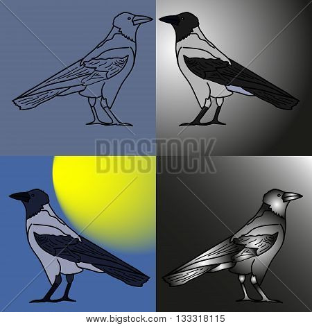 Ravens. four variants coloring raven dry and shiny silhouette and outline.