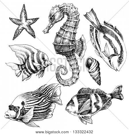 Fish, sea horse, marine life hand drawn set. Sea life vector sketch