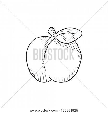 Apple vector sketch icon isolated on background. Hand drawn Apple icon. Apple sketch icon for infographic, website or app.