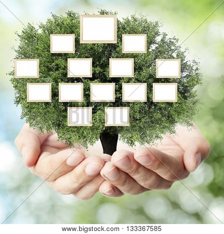Hands holding family (genealogy ) tree with blank frames, on nature background