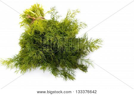 Bunch of fresh dill isolated on white background