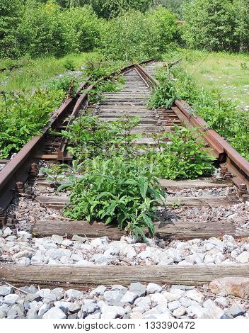 Overgrown railroad track  with selective focus on the foreground