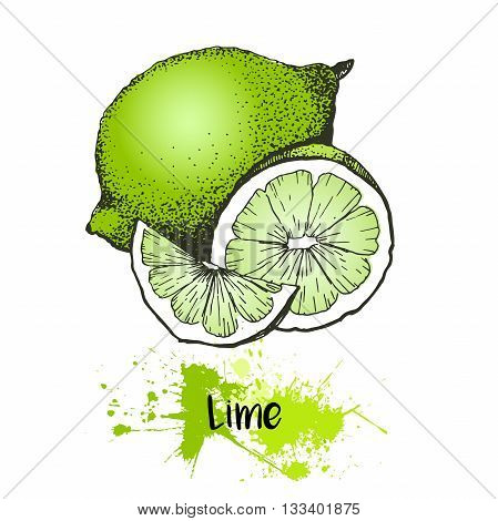 Vector hand drawn illustration of lemon or lime fruit. Green color summer fresh citrus fruit isolated on white background. For cocktail smoothie desserts and salsds.