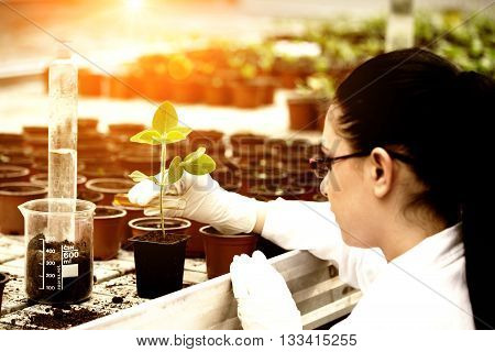 Biologist Pouring Liquid Into Flower Pot With Sprout
