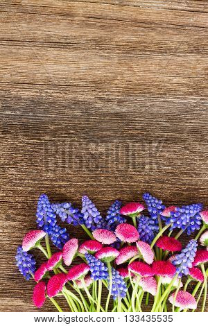 fresh Muscari and Daisy Flowers on wooden table background