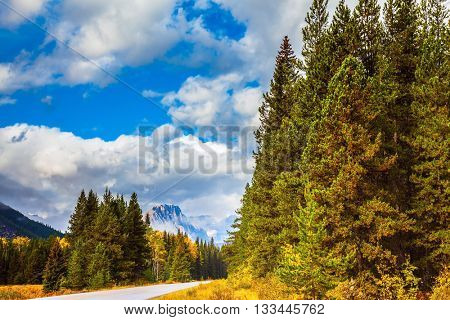 Beautiful nature of the Rocky Mountains of Canada. Evergreen coniferous forests, majestic mountains and the yellow autumn bushes
