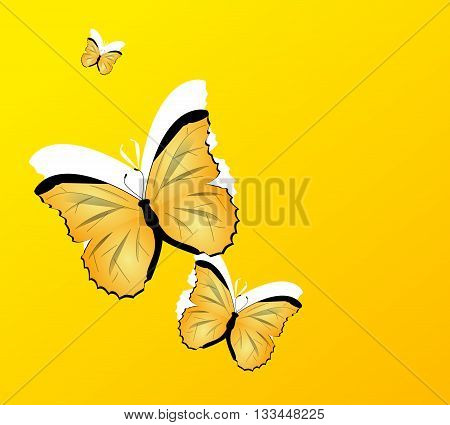Yellow background decorated with three yellow butterflies