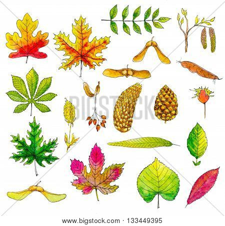 set of watercolor leaves and seeds over white background