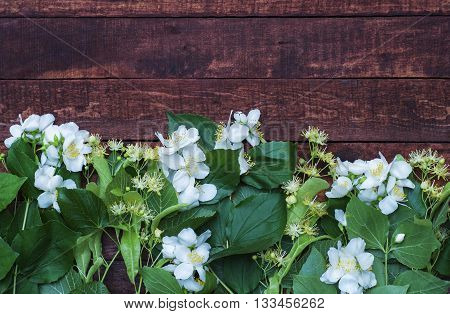 branches of jasmine and linden tree branch on a wooden brown background