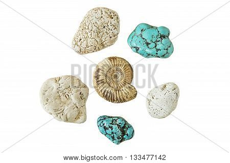 Ammonite and blue turquoise isolated on a white background