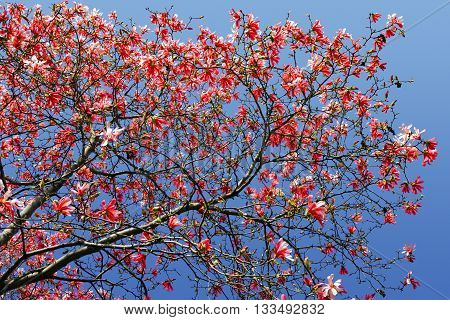 Red spring flowers blooming on tree against blue sky background