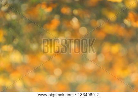 Blurred Orange Lights Circular Bokeh