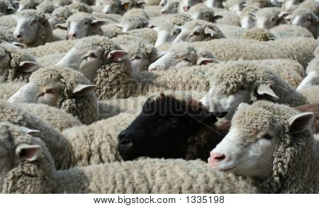 Nothing But Wool 8