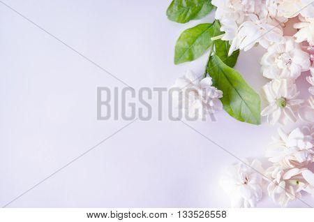 Jasmine (Other names are Jasminum Jasmine Melati Jessamine Jasmine Oleaceae) flowers isolated on white background for graphic usage