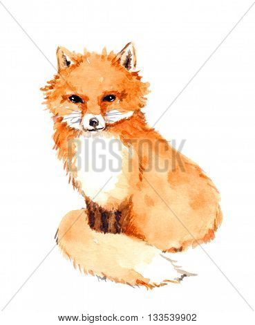 Fox animal. Watercolor wildlife painting - character animal