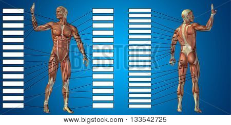 3D illustration of a concept or conceptual 3D human man anatomy and muscle for sport and textbox on blue background