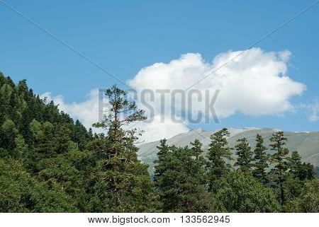 Greater Caucasus mountains landscape in Arkhyz Karachay-Cherkessia; Russia
