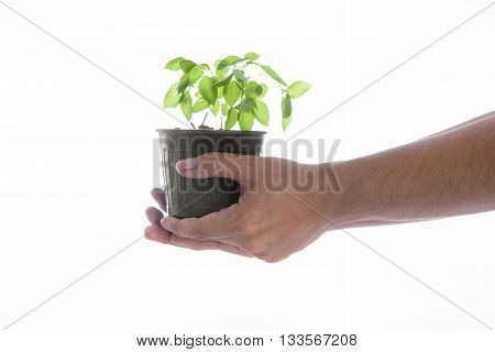 Man hand holding a little green tree plant on white background